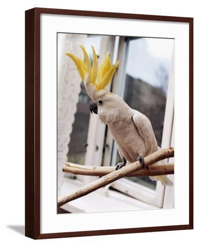 A Cockatoo--Framed Art Print