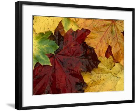 Autumn Leaves--Framed Art Print
