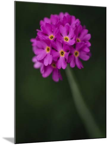 A Purple Flower--Mounted Photographic Print