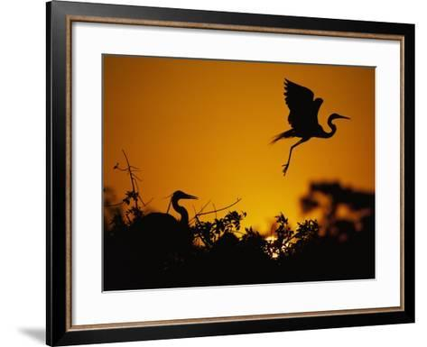 silhouette of great blue heron on ground and great egret in flight