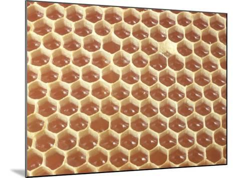 Honeycomb Filled with Honey-Jeff Foott-Mounted Photographic Print