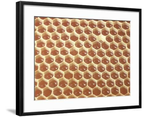Honeycomb Filled with Honey-Jeff Foott-Framed Art Print