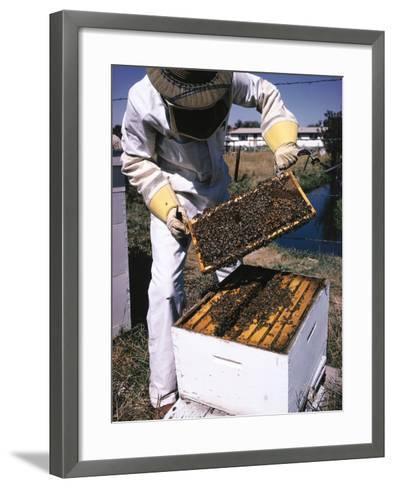 Honeycomb Held by Beekeeper-Jeff Foott-Framed Art Print