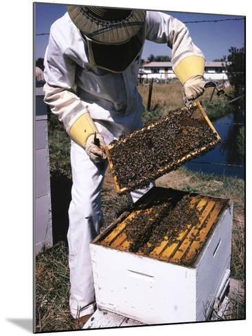 Honeycomb Held by Beekeeper-Jeff Foott-Mounted Photographic Print