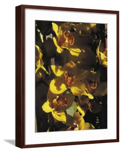 Close-Up of Orchid Flowers-C^ Sappa-Framed Art Print