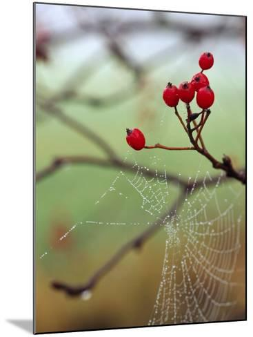 Red Berries and a Spider Web--Mounted Photographic Print