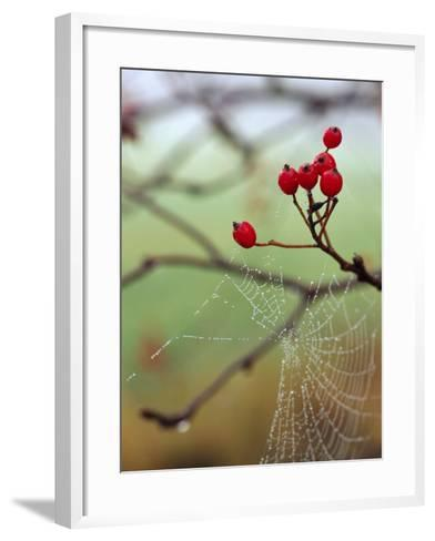 Red Berries and a Spider Web--Framed Art Print
