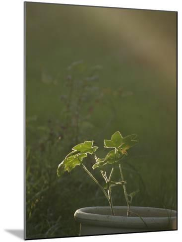 Close-Up of a Potted Plant in a Garden--Mounted Photographic Print