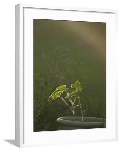 Close-Up of a Potted Plant in a Garden--Framed Art Print