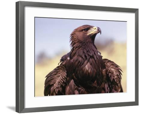 Profile of Golden Eagle-Jeff Foott-Framed Art Print