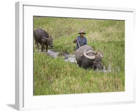 China, Yunnan Province, Farmer Ploughing with Water Buffalo in the Rice Paddy-Keren Su-Framed Art Print