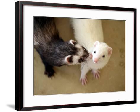 Ferret Kissing Ferret--Framed Art Print
