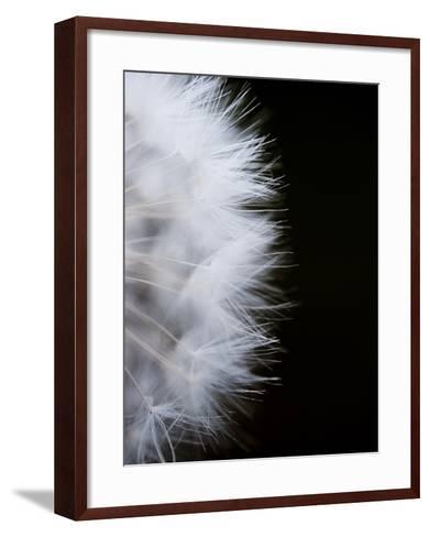 Close-Up of a Dandelion Flower--Framed Art Print