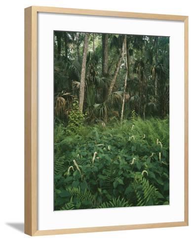 Usa, Florida, Highland Hammock State Park-Jeff Foott-Framed Art Print