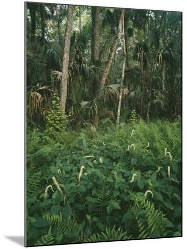 Usa, Florida, Highland Hammock State Park-Jeff Foott-Mounted Photographic Print