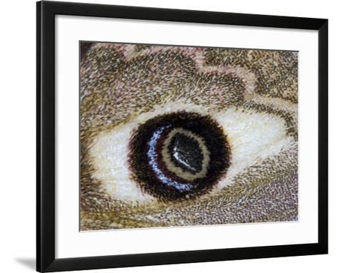 Close-Up of an Eye Pattern on the Wing of a Butterfly--Framed Art Print