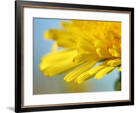 Dreamy Dandelion Detail, Fresh and Colorful--Framed Art Print