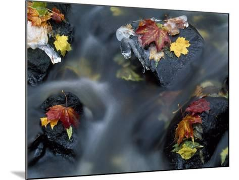 High Angle View of Maple Leaves and Rocks in a Stream--Mounted Photographic Print