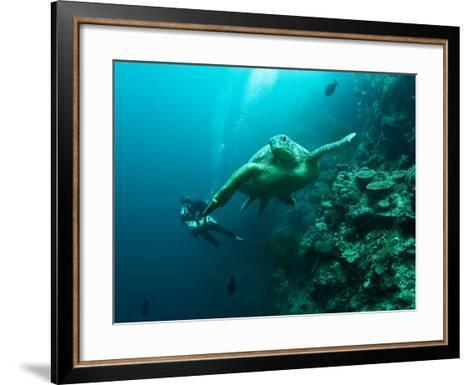 Diver and Turtle--Framed Art Print