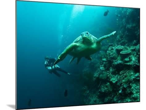 Diver and Turtle--Mounted Photographic Print