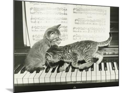 Two Kitten Playing on Piano Keyboard-George Marks-Mounted Photographic Print