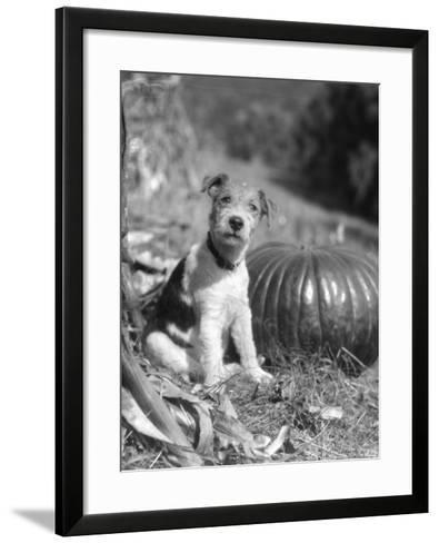 Wire Hair Terrier-H^ Armstrong Roberts-Framed Art Print