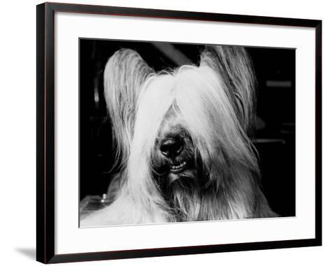 Skye Terrier With Hair Covering Eyes and Bottom Teeth Showing-H^ Armstrong Roberts-Framed Art Print