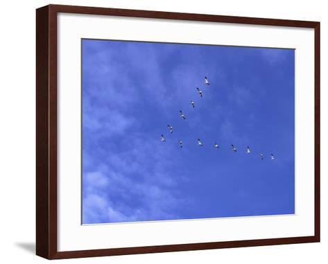 Arkansas, Stuttgart, Geese Head South in the Skies over Southeastern Arkansas--Framed Art Print