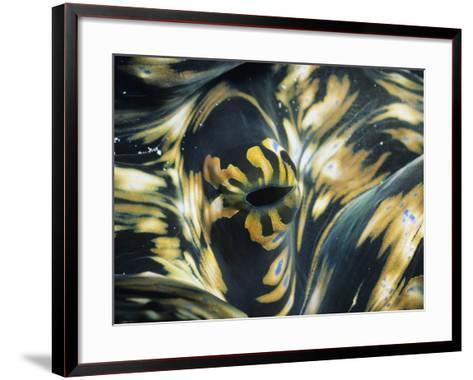 Close-Up of Giant Clam (Tridacna), Suluwesi, Indonesia--Framed Art Print