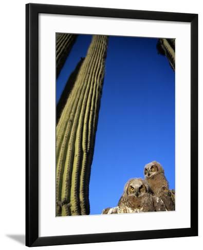 Low Angle View of Two Brown Owls Sitting Next to Green Cactus Plants, Brilliant Blue Sky Overhead--Framed Art Print