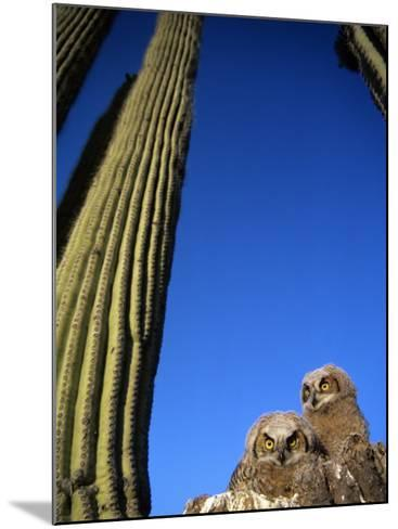Low Angle View of Two Brown Owls Sitting Next to Green Cactus Plants, Brilliant Blue Sky Overhead--Mounted Photographic Print
