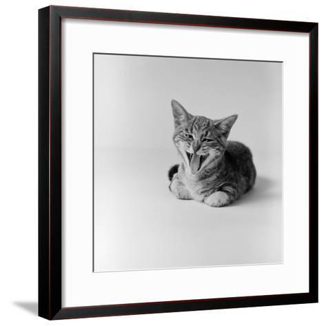 Kitten Lying Down, Yawning-H^ Armstrong Roberts-Framed Art Print