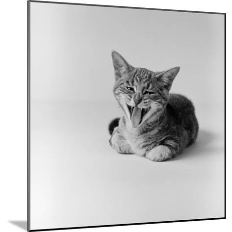 Kitten Lying Down, Yawning-H^ Armstrong Roberts-Mounted Photographic Print