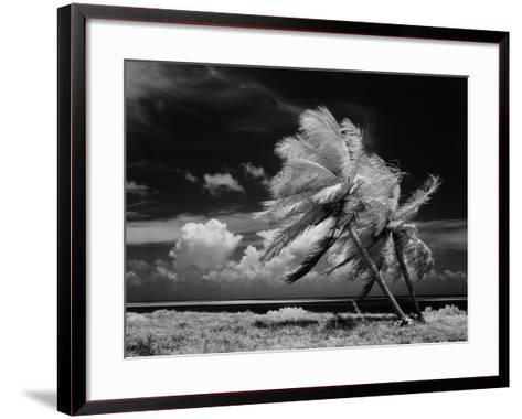 Palm Trees Blowing in Wind-H^ Armstrong Roberts-Framed Art Print