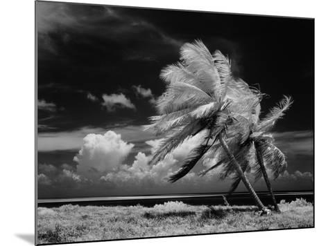 Palm Trees Blowing in Wind-H^ Armstrong Roberts-Mounted Photographic Print