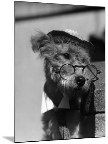 Terrier Dog Wearing Spectacles and Hat-H^ Armstrong Roberts-Mounted Photographic Print