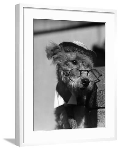 Terrier Dog Wearing Spectacles and Hat-H^ Armstrong Roberts-Framed Art Print