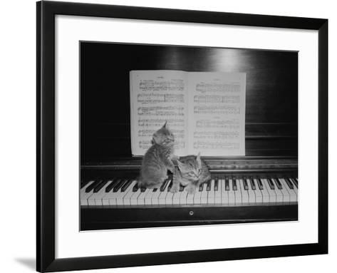 Two Kittens Sitting on Piano Keyboard By Sheet Music-George Marks-Framed Art Print