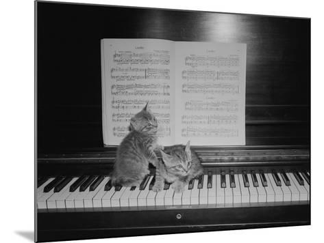 Two Kittens Sitting on Piano Keyboard By Sheet Music-George Marks-Mounted Photographic Print