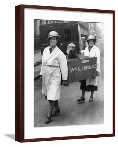 Animal Ambulance--Framed Art Print