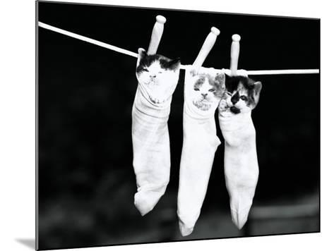 Three Kittens in Socks-H^ Armstrong Roberts-Mounted Photographic Print
