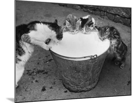 Cat's Got the Cream--Mounted Photographic Print