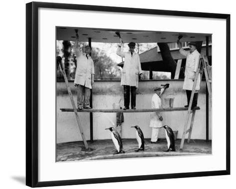 Penguins Decoration--Framed Art Print