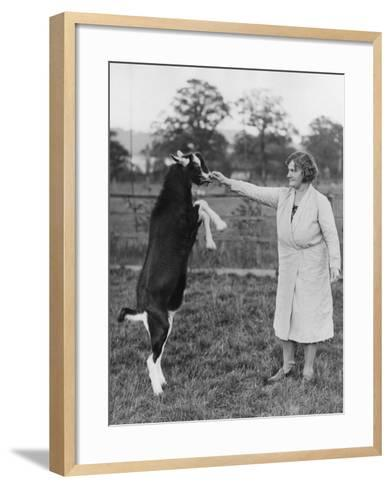 Perfrorming Goat--Framed Art Print