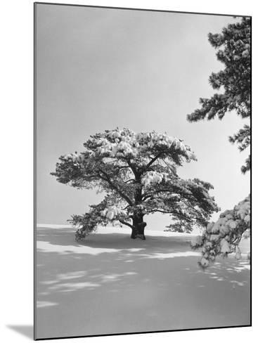Winter Landscape-George Marks-Mounted Photographic Print