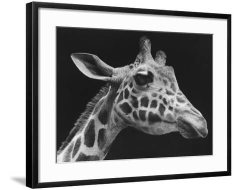 Giraffe's Head (B&W)-George Marks-Framed Art Print