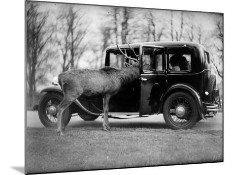 Any Sandwiches?--Mounted Photographic Print