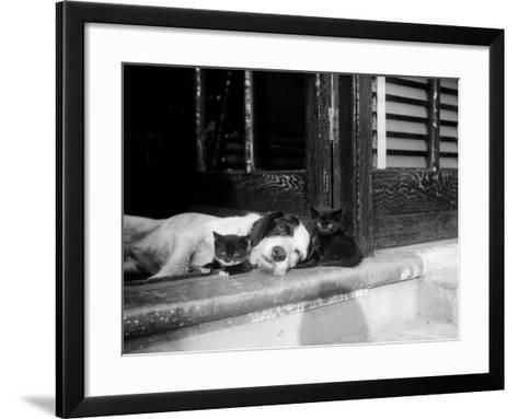 Best of Friends--Framed Art Print