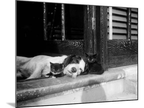 Best of Friends--Mounted Photographic Print