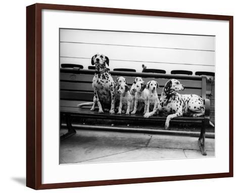 Dalmatian Pups--Framed Art Print
